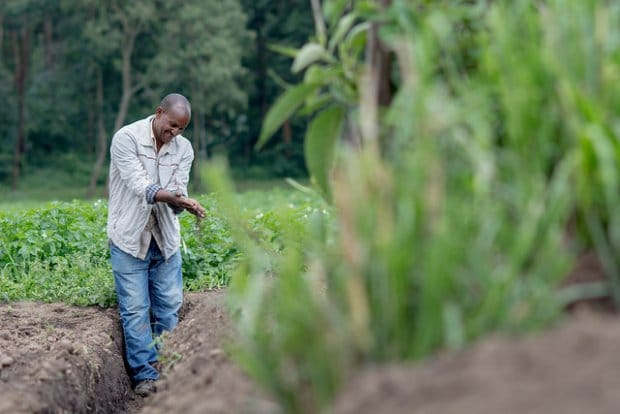 CGIAR study exposes gap in global climate policy as countries commit to action on agriculture