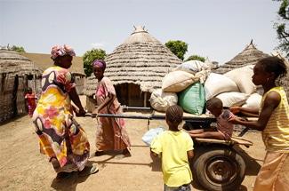 Le secteur privé, un groupe hétéroclite aux intérêts divergents : Le cas de la filière riz au Sénégal et en Côte d'Ivoire