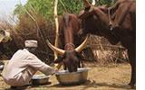 Comment Boko Haram détruit les exploitations agricoles