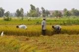 Note d'analyse sur la filière riz au Niger