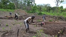 Considering land tenure security for structural transformation of African agriculture