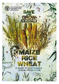 Save and Grow in practice: maize