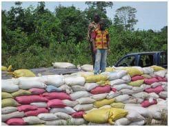 L'innovation « fiente de poulet » dans les cacaoyères : réseaux familiaux et migratoires en Côte d'Ivoire