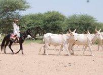 Cycle pastoralisme : une rencontre et plusieurs publications