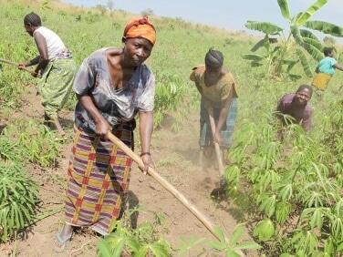 Note de la C2A : Quelles politiques foncières promouvoir pour sécuriser les agricultures familiales en Afrique ?
