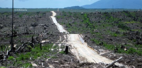 How investment treaties protect 'land grab' deals