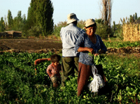 Outcomes regional meetings on agroecology