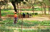La petite irrigation par les eaux souterraines