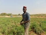 Conseiller en maraîchage : visite du site de Tabalak (Niger)