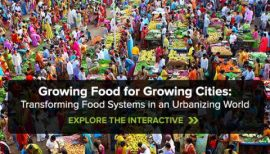 Growing Food for Growing Cities: Transforming Food Systems in an Urbanizing World