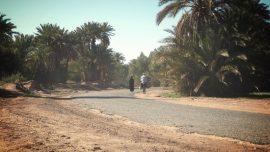 L'Afrique imagine une Grande Muraille verte face au Sahara