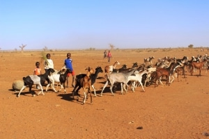 Launch of the Platform of analysis and measurement of population resilience in Sahel, West Africa