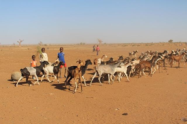 Lancement de la Plateforme d'analyse et de mesure de la résilience des populations au Sahel et en Afrique de l'Ouest