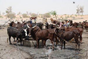 Ethnographie des pratiques de sécurisation de l'accès aux ressources agropastorales à Dianra (Côte d'Ivoire)