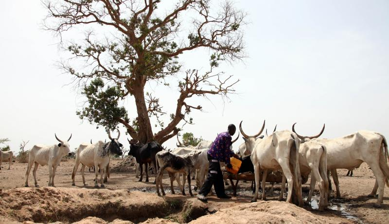 Nigeria's Government Must Ensure a Balanced Response to the Pastoralist−Settler Crisis
