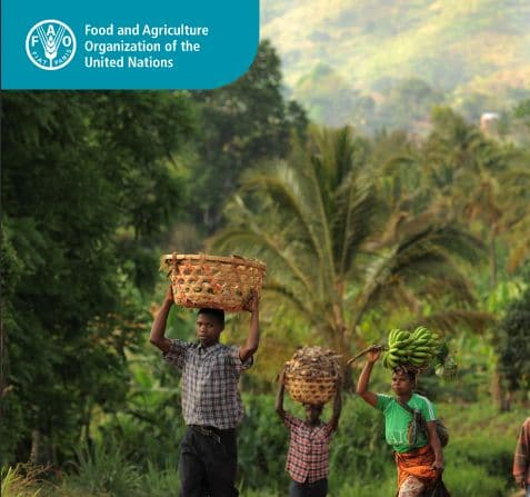 Decent rural employment, productivity effects and poverty reduction in sub-Saharan Africa