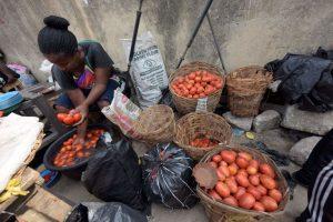 Une larve ruine la production nigériane de tomates
