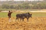 Prévisions climatiques saisonnières 2016 en Afrique soudano-sahélienne