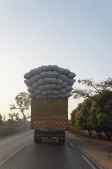 OGM en Afrique de l'Ouest : les pays ne pourront plus dire non !
