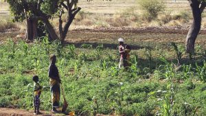 Le Parlement européen s'oppose au colonialisme agricole en Afrique