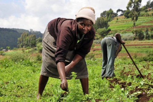 Libre-échange avec l'Europe : l'Afrique en péril