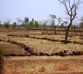 Changements climatiques et agriculture durable au Burkina Faso : stratégies de résilience basées sur les savoirs locaux