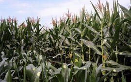 Le monde agricole s'inquiète des méga-fusions dans l'agrochimie