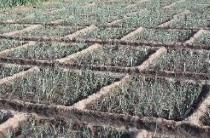Aménagement et préparation du terrain en maraîchage /Pratiques paysannes au Niger.