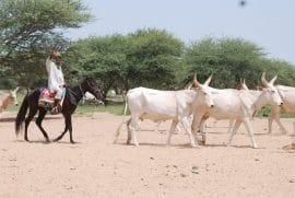 """Information sur le projet """"Pastoralisme et Stabilité au Sahel et dans la Corne de l'Afrique"""""""