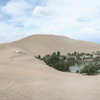 Vidéo - L'agriculture régénératrice : une solution clé pour répondre à la désertification