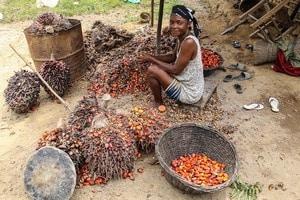 Les femmes ouest africaines défendent l'huile de palme traditionnelle