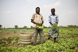 Action conjointe en faveur des organisations paysannes en Afrique de l'Ouest - Appel à propositions