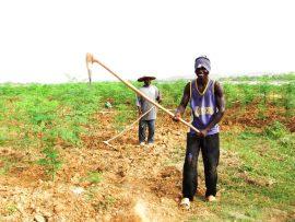 Comment l'agriculture peut-elle répondre à l'arrivée massive de jeunes Sénégalais sur le marché du travail ?