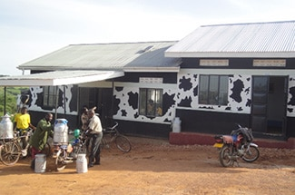 A glass half full: East African dairy farmers see potential in regional cooperation