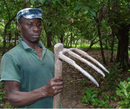 Le cacao aux portes d'Abidjan : de la forêt à la décharge publique. Traques et caches des innovations villageoises