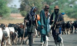 Éviter la crise de l'élevage : Point de vue de l'APESS sur la situation de l'élevage en Afrique de l'Ouest depuis 2005