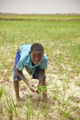 Strengthening Regional Agricultural Integration in West Africa