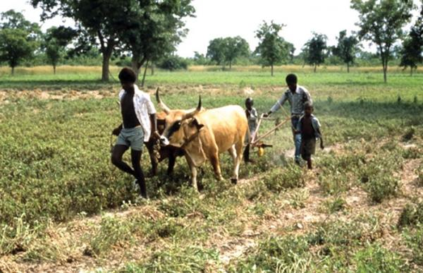 Sénégal - La société civile questionne le financement agricole