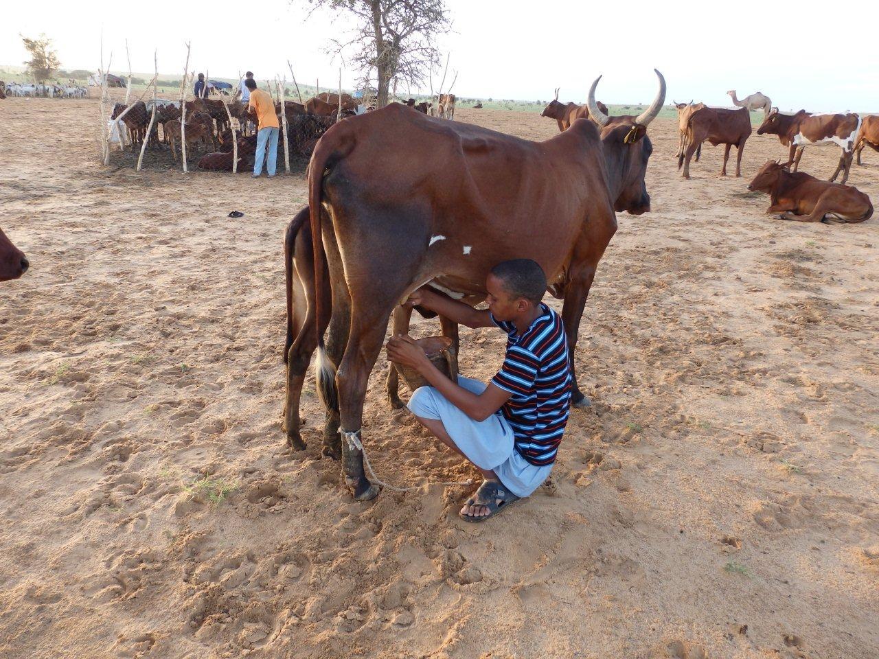 FAO : un outil pour évaluer l'empreinte carbone des élevages