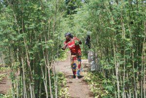 Le Cameroun parmi les pays les plus prisés pour ses terres