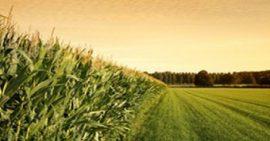 """Le Burkina Faso crééra une """"banque agricole"""" pour soutenir l'agriculture"""