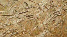 Opinion : « Le libre-échange peut répondre aux effets du réchauffement climatique sur l'agriculture »