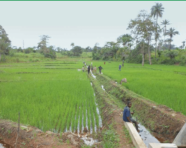 Rehabilitation and Development of Integrated Lowland Rice Farming in Liberia