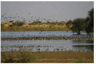 Contribuer à la sécurité alimentaire grâce à la gestion durable des oiseaux dans la région du Sahel
