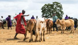 Taking stock of Africa's livestock emissions