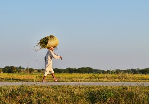 Le Comité de la sécurité alimentaire mondiale s'ouvre sur les changements climatiques