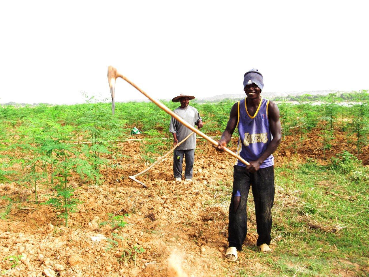 L'Institut nigérian des géomètres dénonce l'acquisition massive et illégale de terres par les gouverneurs d'État