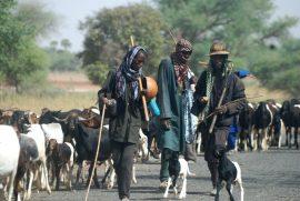 Le CILSS lance un Master professionnel en pastoralisme