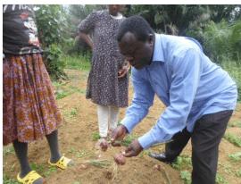 Cameroun : La culture des oignons réussit dans la zone forestière du Sud