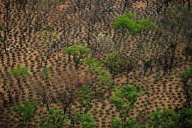 La fusion Rongead-Etc Terra à l'image des défis agro-forestiers ivoiriens
